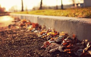 leaves-on-the-sidewalk-1440x900